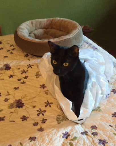 cute black cat poking out of plastic bag on bed
