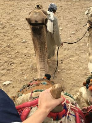 Photo 4 Camels